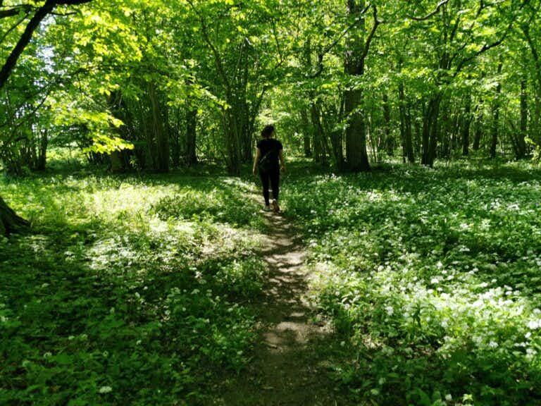 Grönska i gotländskt änge i början av juni