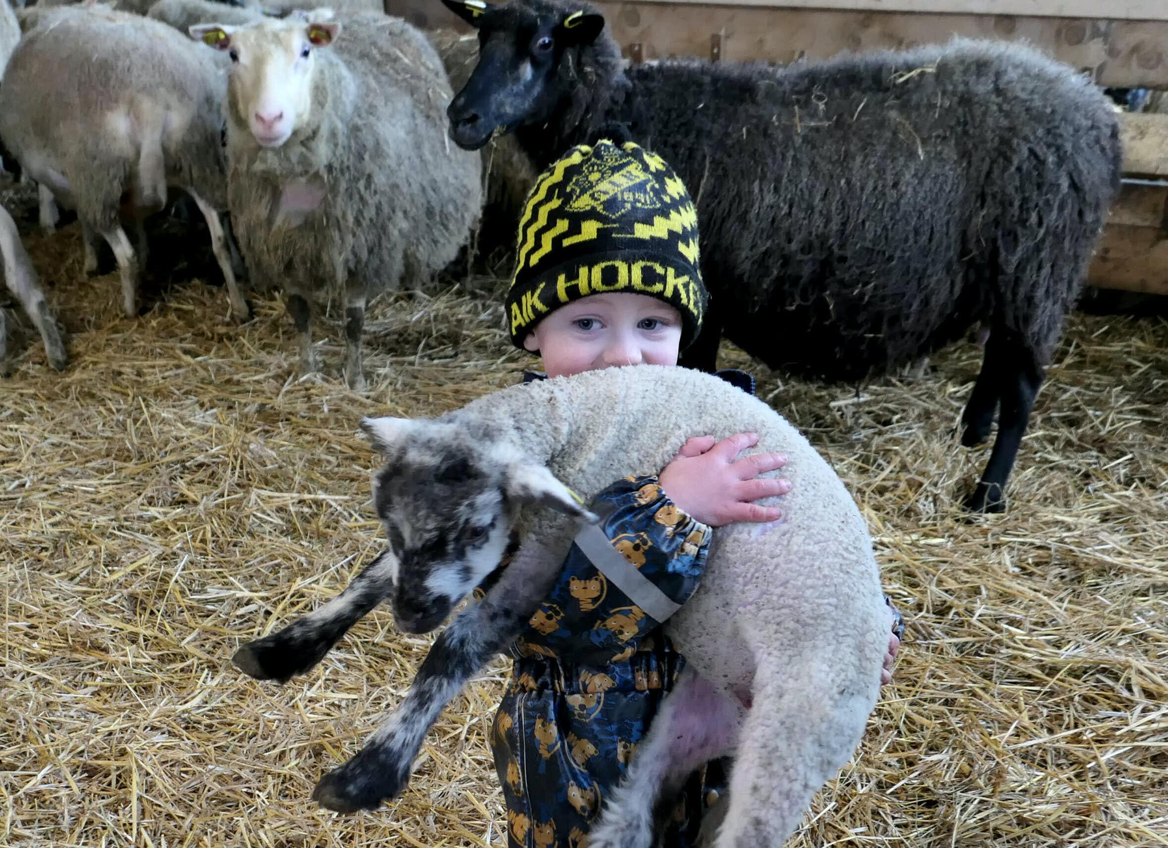 Pojke med lamm