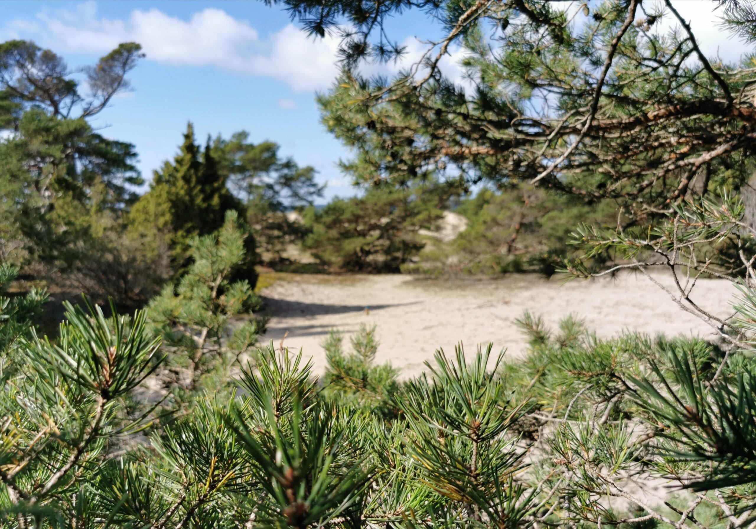 Smågårde strandskog